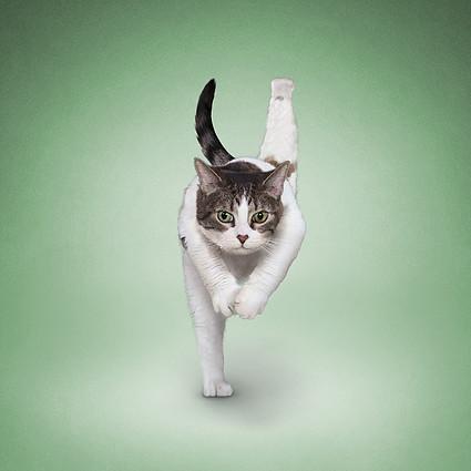 爱练瑜伽的小猫小狗你见过吗?-野生动物艺术家介绍
