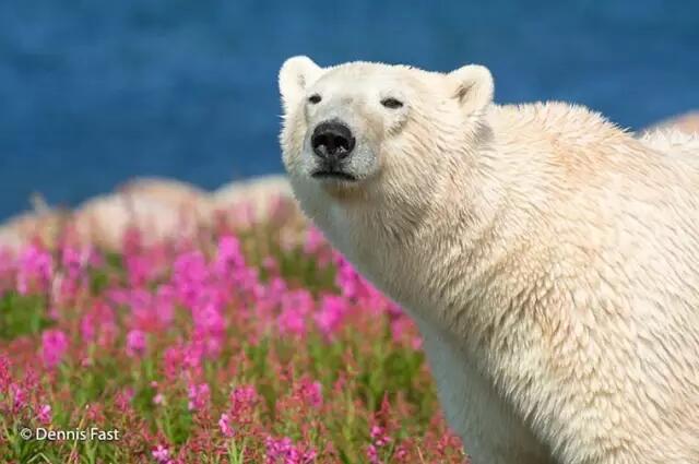 """""""我们破坏的环境,   并不只是人类生存的环境,   也是所有动物共同"""