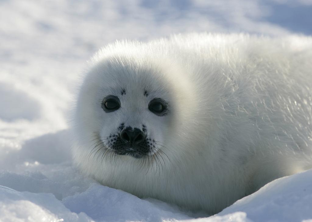 是世界上最可爱的动物之一.