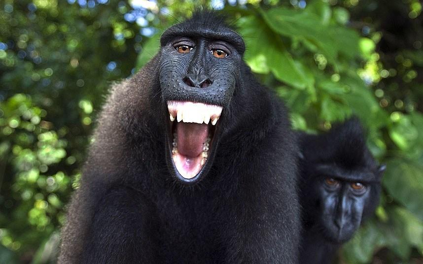 世界红色名录极危野生动物保护物种