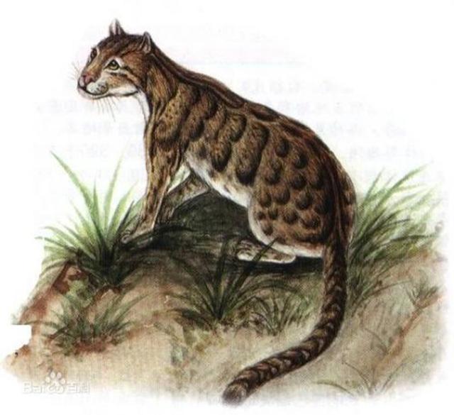 由于小齿椰子猫的主要栖息地被