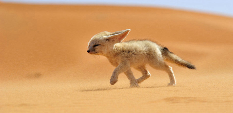 世界上最萌的十大动物,不服来辩